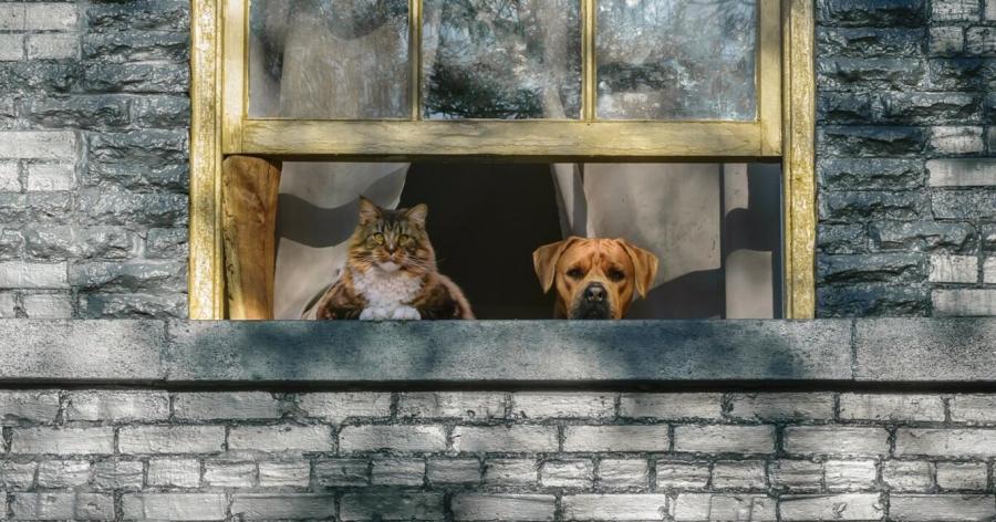 las mascotas pueden sufrir ansiedad postcoronavirus al separarse de sus dueños