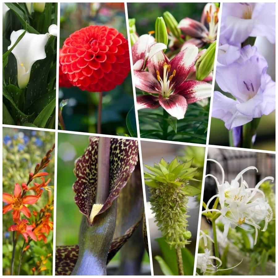 Los 10 mejores bulbos de verano con flores impresionantes