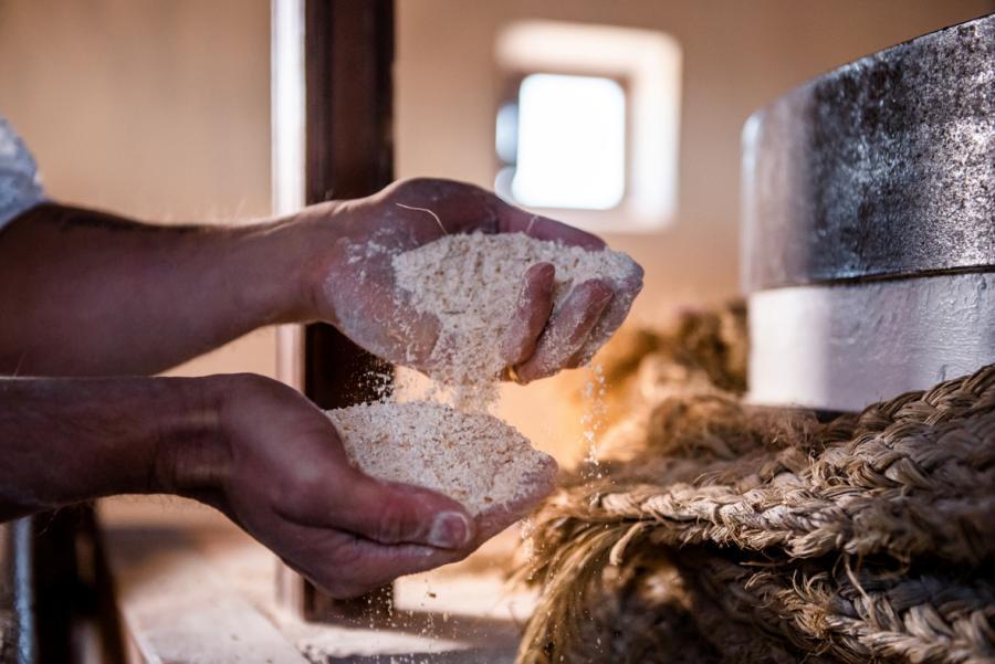 Todo sobre las harinas: ¿Cuál elegir para un pan casero?