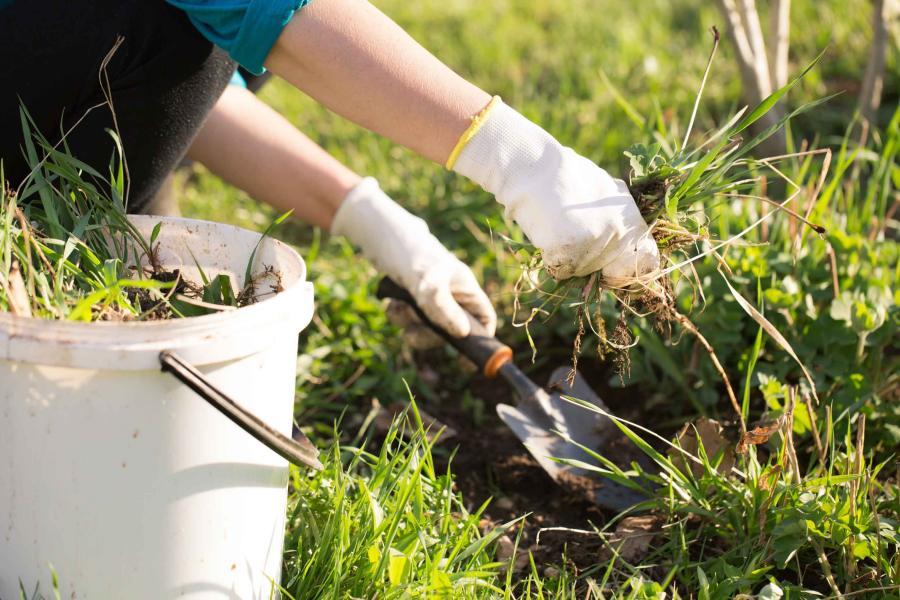 Consejos para mantener tus plantas