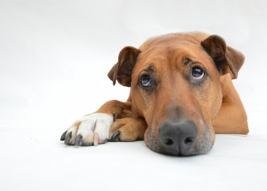 consejos para gestionar la ansiedad por separación de las mascotas