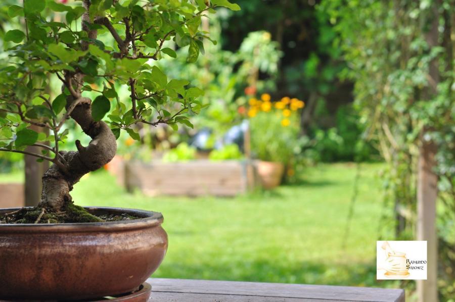 ventajas de usar una maceta de bonsái de barro