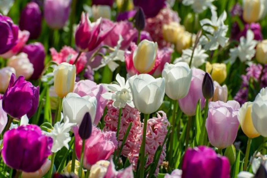 ¿Qué tengo que tener en cuenta al comprar bulbos de flor?