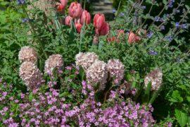 Crear relevancia en el jardín con bulbos de flor