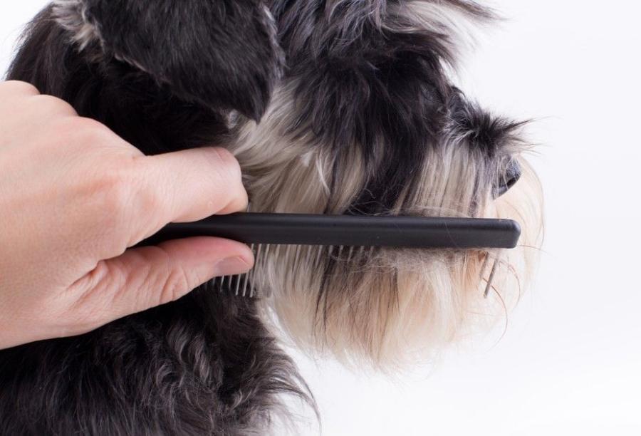 odo lo que se tiene que saber sobre la muda de pelo de los perros este otoño