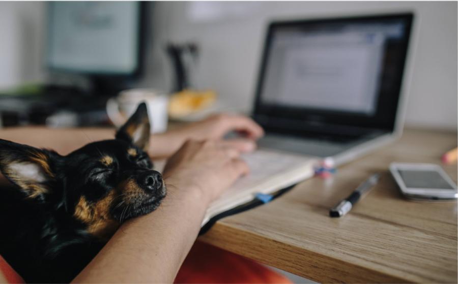 Cómo organizar tu hogar para trabajar desde la mejor oficina del mundo