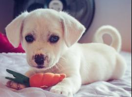 Los 5 consejos básicos para escoger el mejor nombre para un perro
