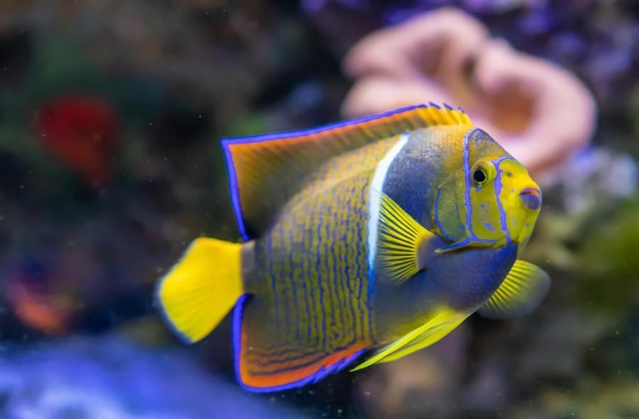 OASE: ORGANIX, lo mejor de Alaska para sus peces