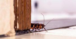 Esto es lo que pasa cuando una cucaracha entra en una casa