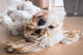 Mascotas y auriculares: consejos para una correcta convivencia