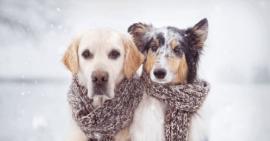 Claves para proteger a los perros de la nieve y el frío, según Wamiz