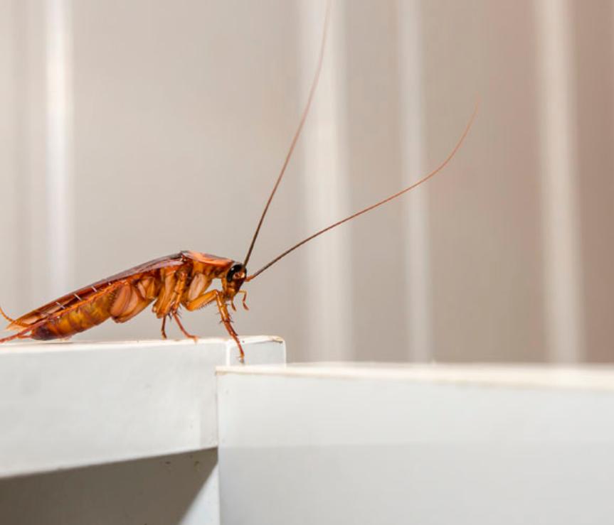Eliminación de plagas domésticas ¿Qué insectos habitan las casas?