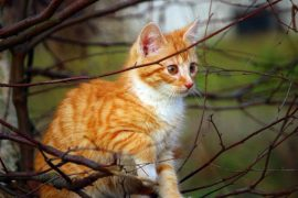 cómo proteger al gato frente a la artrosis