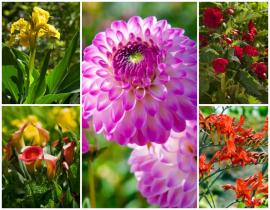 Las 5 mejores flores de verano