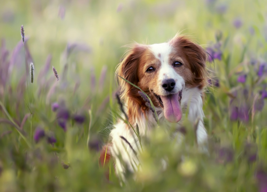 """La primavera también """"altera"""" a las mascotas"""