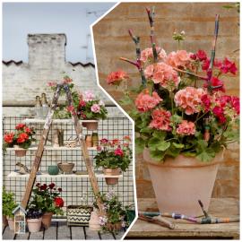 Ideas DIY para tu refugio urbano con geranios y otras plantas