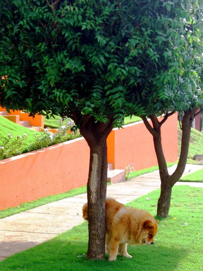 Machismo perruno: 5 conductas socialmente aceptadas en perros, pero desagradables para el propietario