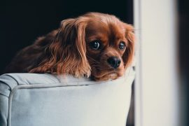mascotas y vivienda