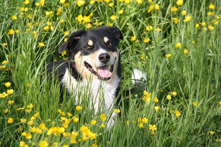 Consejos para salir a pasear con tu perro en primavera