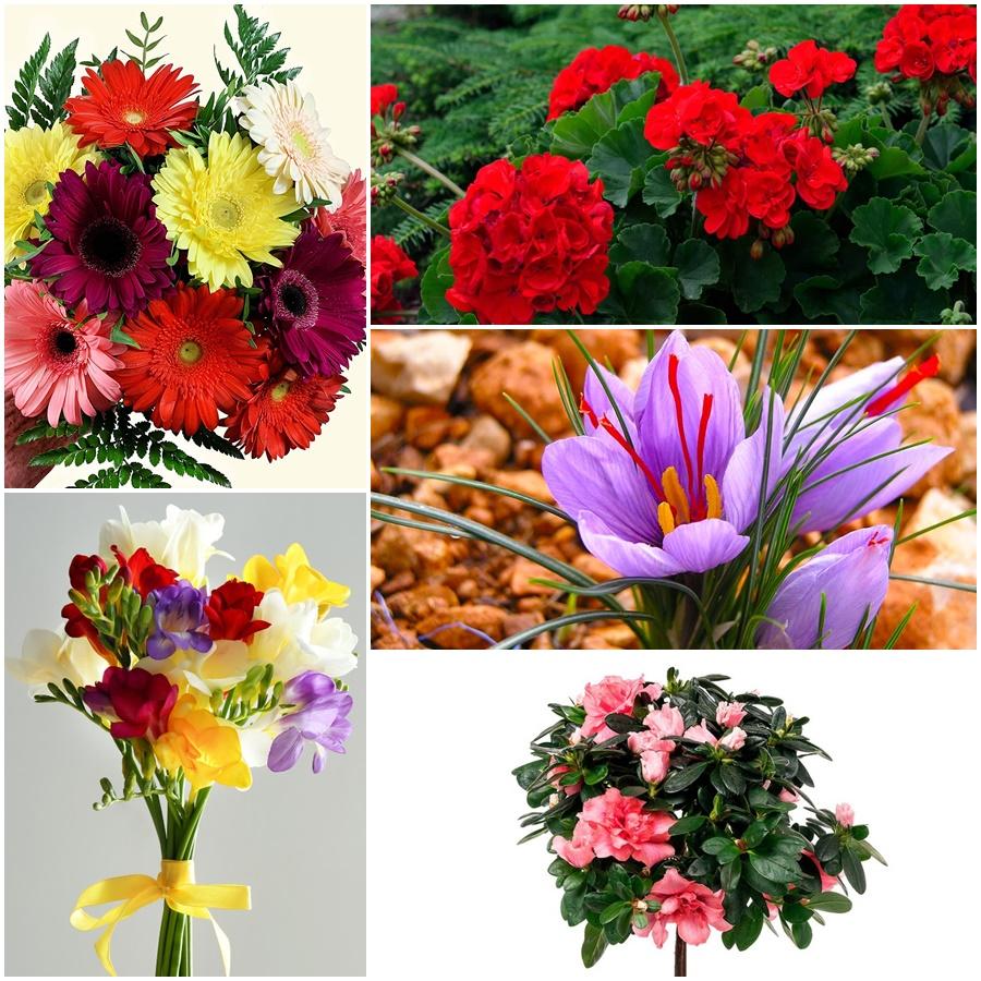¿Qué flores plantar esta primavera?