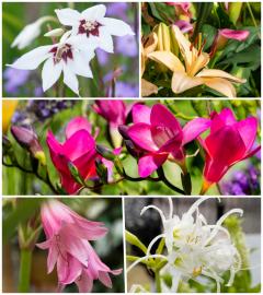 Estimula tus sentidos con flores de verano fragantes