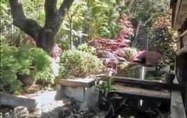 ¿Qué puede hacer un decorador de jardines?