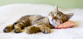 trucos infalibles para eliminar los pelos de gato de la ropa y del hogar