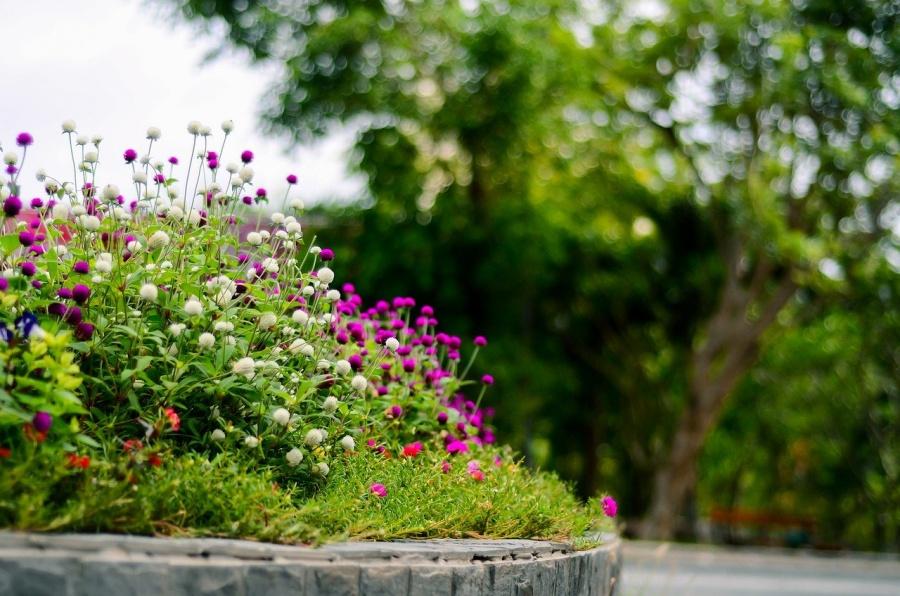 6 consejos para lograr que tus plantas sobrevivan a las futuras olas de calor